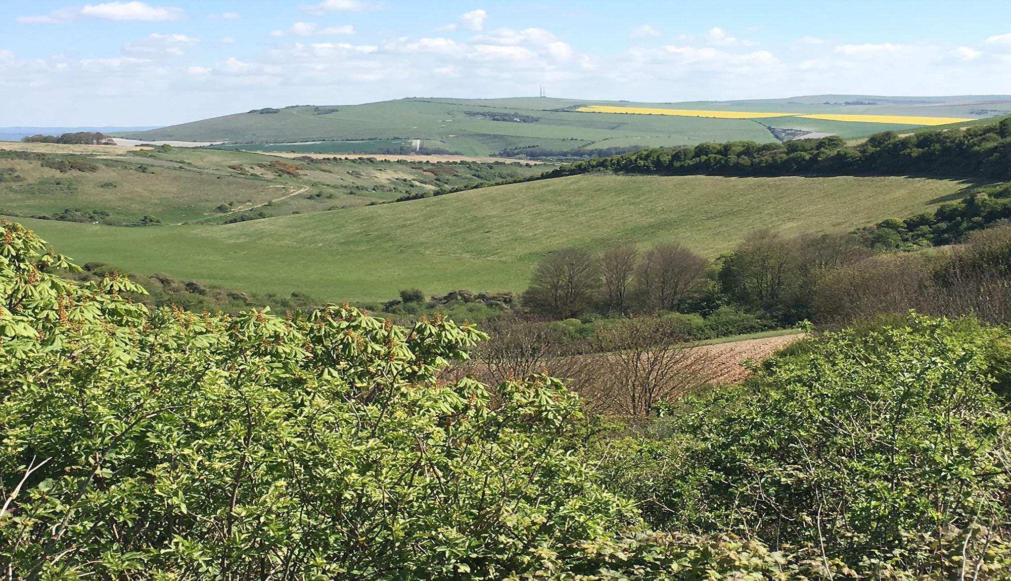 Sussex Downland