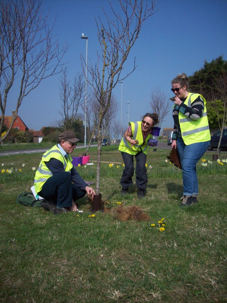 Seaford Tree Wardens