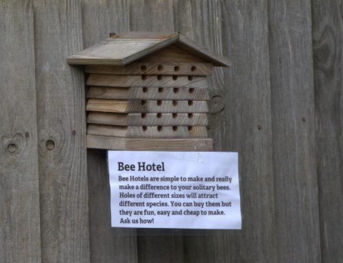 Bees Needs Part 4 – Homes for bees