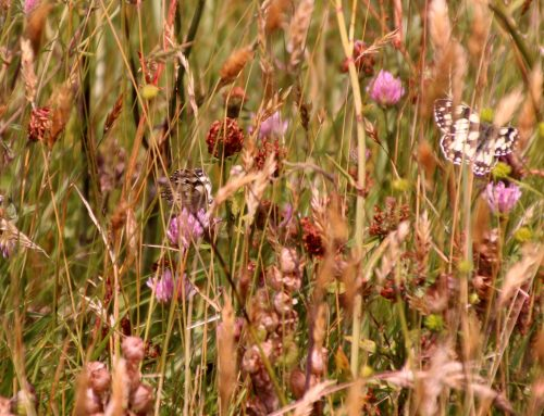 6 July – National Meadows Day