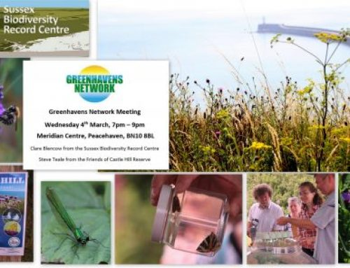 Nature Recording – City Nature Challenge and our Network meeting