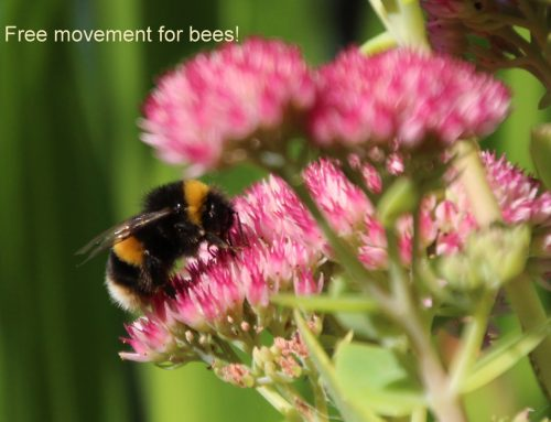 BEE-EXIT and the free movement of bees – our Green Corridor workshop!
