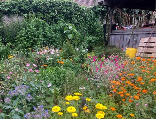 Case study – Dementia and frailty co-ordinator and Landport Community Garden