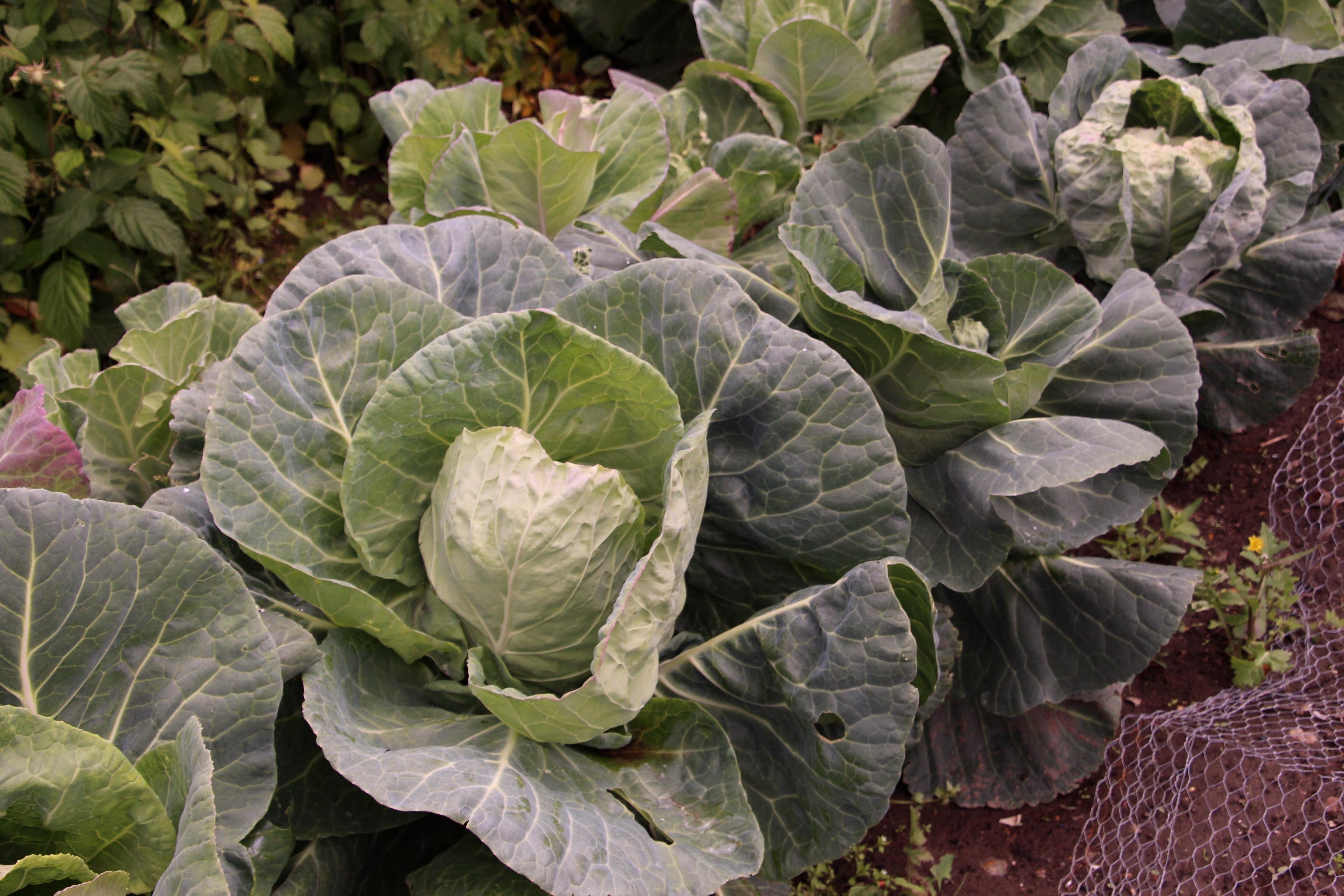 Festive season leftovers? – Reducing food waste in 2020