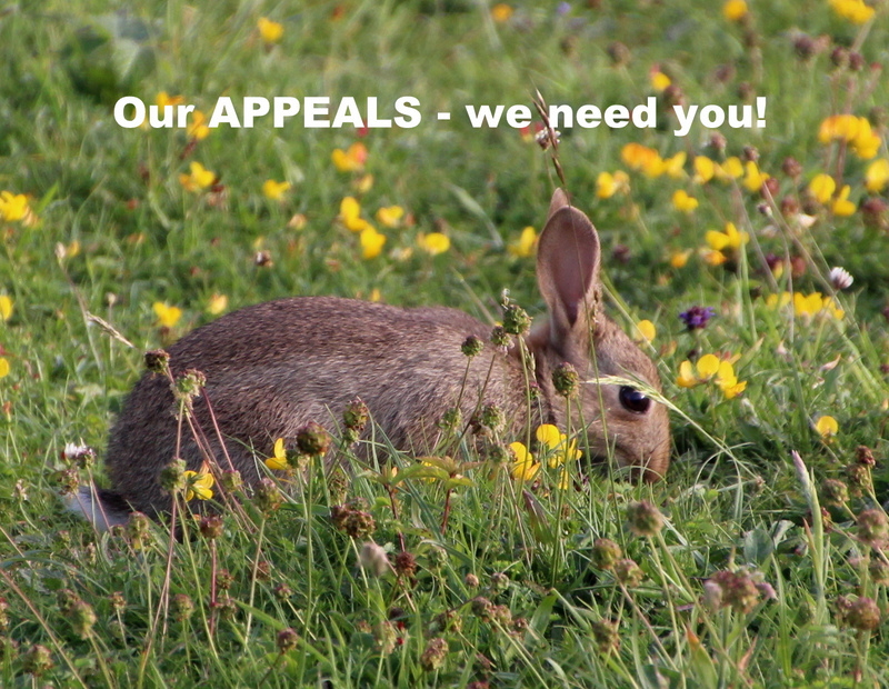 March appeals! Helping the green havens