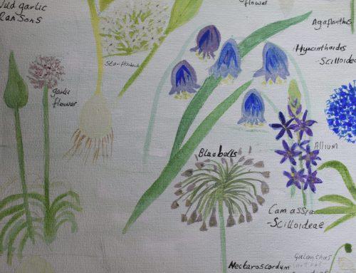 Julia's garden blog – part 1 – discovering the wild flowers