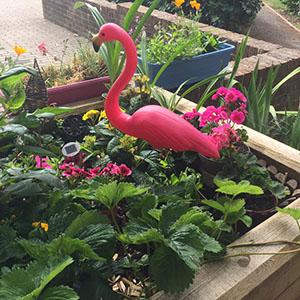 Collingwood Pocket Garden