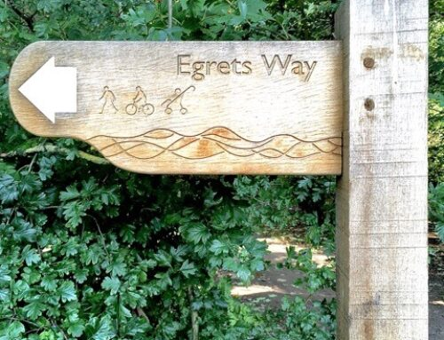 Egrets Way – A 10 Year History in Pictures