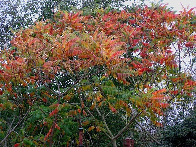 telscombe tree wardens