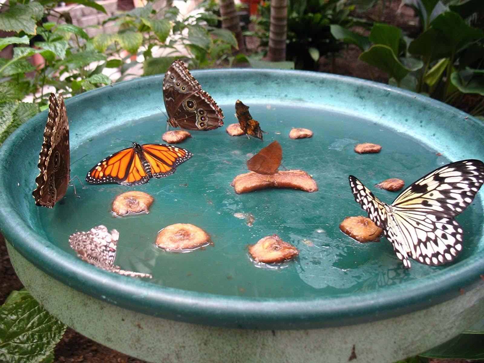 Butterfly Paddling Station