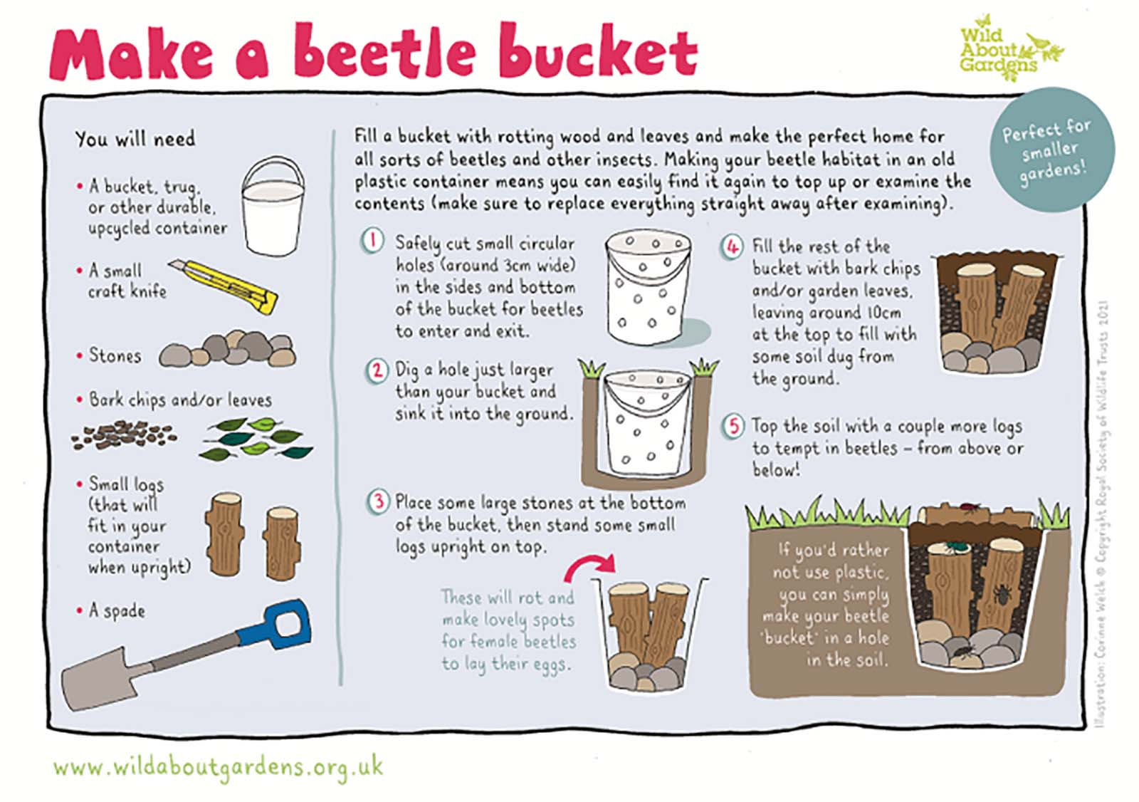 Make a beetle bucket