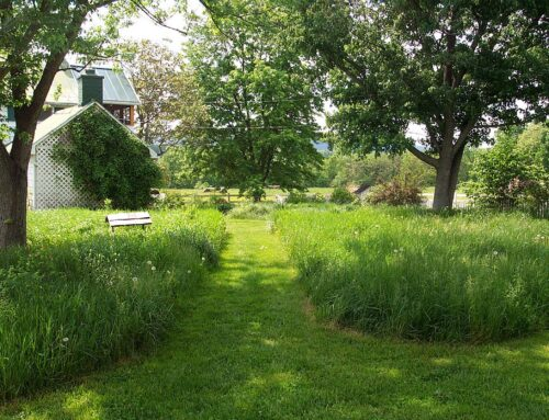 No Mow – Stop Mowing and Leave a Patch Wild