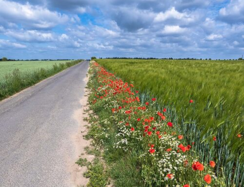 Make Your Verges Work for Wildlife